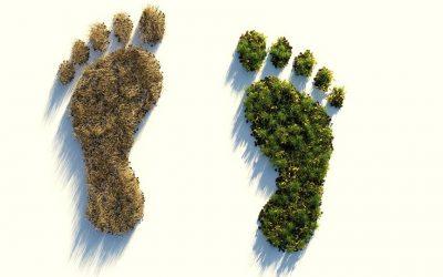 6 acciones para cuidar el medio ambiente